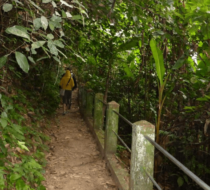 Trekking in Cuc Phuong and Ngoc Son Nature Reserve 4 days