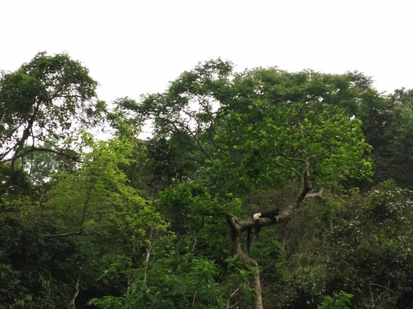 Semi nature Cuc Phuong national park