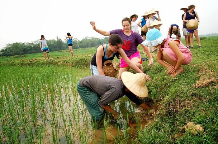 Ninh Binh farming tour