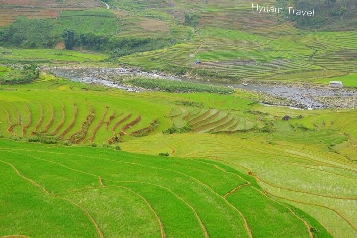 Sapa terraced paddy field