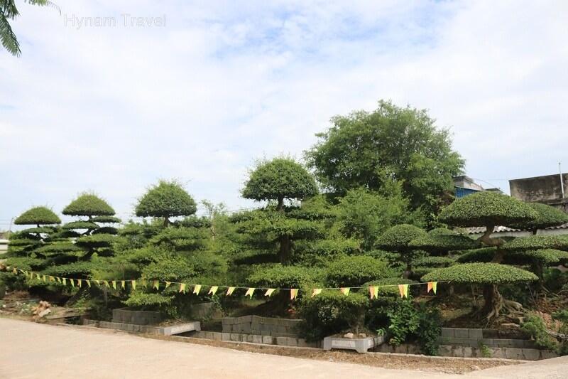 Vi Khe bonsai village Nam Dinh