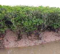Hai Hau Ecological tour