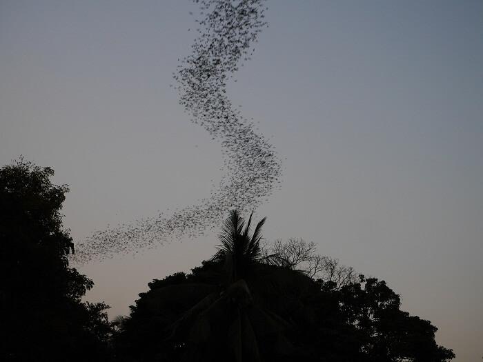 Bat Cave Battambang