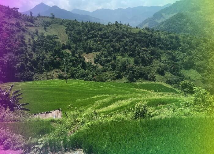 Mai Chau terraced paddy field